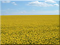 SP8920 : Fields of Gold near Mentmore by Adam