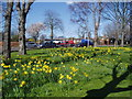 TQ4877 : Trees and daffodils, Bedonwell Road, Bexley, Kent by Dr Neil Clifton
