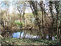 TQ0282 : Pond at Iver Heath Nature Reserve by Peter Ross