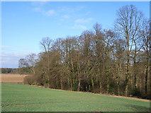 SU9395 : Beeches near Winchmore Hill by Andrew Smith