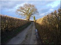 SU9396 : Cherry Lane, Woodrow by Andrew Smith