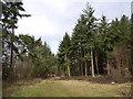 SU9593 : Owlsears Wood by Andrew Smith