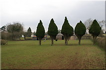 ST5164 : Five Trees by Adrian and Janet Quantock
