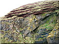NT8170 : Hutton's Unconformity, Siccar Point by Lisa Jarvis