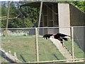 TM0587 : Banham Zoo by Simon Gray