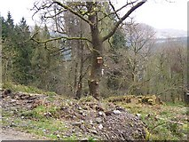 NS1393 : Loch Eck, Benmore-Glenbranter Forestry Road by william craig