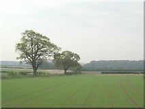 SE5447 : Open farmland in the Vale of York by Jeremy Howat