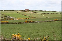 SW7038 : Shallow Valley in Pasture Land by Tony Atkin