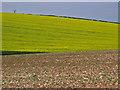 TA0666 : Farmland at TA069661 by Stephen Horncastle