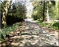 SJ5868 : Hogshead Lane, Oakmere by Jo Lxix