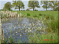 SJ4650 : Water violets in pond at Tilston by Mike Harris