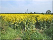 TL1559 : Rape field. by Mike Fowkes