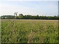 TL1138 : Upper Alders, Flit valley, Chicksands, Beds by Rodney Burton