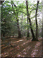 SU3804 : Woodland north of the North Gate, New Forest by Jim Champion