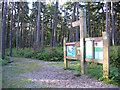 TL1240 : Rowney Warren pine woodland, Southill, Beds by Rodney Burton