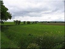 TL1646 : Fields by Andrew Tatlow