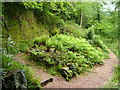 SX5155 : Fernery, Saltram House by Derek Harper
