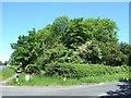 SP8017 : New Road Spinney near Weedon by Rob Farrow
