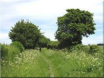 SP8106 : Bridleway across New Farm by Martin Addison