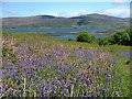 NM4339 : Bluebells, Ulva by Mick Garratt