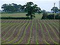 SJ6642 : Field at Kinsey Heath by Nigel Williams