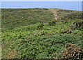 SW6143 : Coast Path on the Clifftop Heathland by Tony Atkin