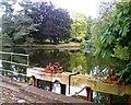 SJ5874 : Acton Mill Pool by Jo Lxix