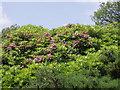 SW6832 : Porkellis Moor by Sheila Russell