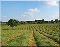 SJ5247 : New-mown hayfield by Bickley Hall Farm by Espresso Addict