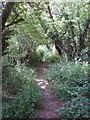 SP9200 : Footpath through belt of woodland, near Hyde Heath by David Hawgood