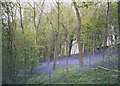 SE0755 : Bluebell wood by Stephen Craven