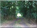 TL1036 : Woodland beside Clophill Road, Gravenhurst, Beds by Rodney Burton