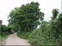 SW6132 : Lane near Pengelly Barton by Sheila Russell