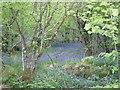 NN2216 : Hazel Wood in Glen Fyne by s allison