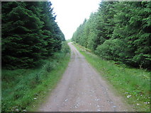 NX4792 : Forest track by Chris Wimbush