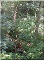 SE1228 : Outfall Bay, Wood Fall, Shelf by Humphrey Bolton