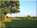 SJ5745 : Pasture near Hollyhurst by Espresso Addict