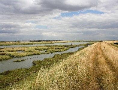 TL9513 : Salt Marsh in Salcott Creek/Blackwater Estuary by Matthew Barker