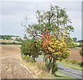 TL0029 : Autumn's round the corner ! by Rob Farrow