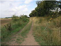 SK6890 : Bridleway to Scaftworth by Michael Patterson
