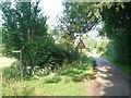 TM1293 : Barham's Lane, Bunwell by Andrew Longton
