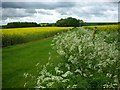 TL0268 : Keck and oil seed rape by Will Lovell