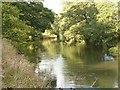SK1141 : River Dove by Patrick Mackie