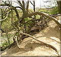 TQ1525 : Exposed tree roots by Andy Potter