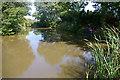 SJ7978 : Road Side Pond by Roger Gittins