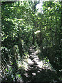 TQ1331 : Wooded section of footpath 2874 by Andy Potter