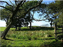 NS5151 : Small Wood Near Langlee by Iain Thompson