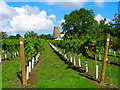 TQ0718 : Nutbourne Manor Windmill by Simon Carey