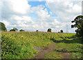 SJ7347 : Pylons east of Blakenhall by Espresso Addict