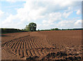 SJ7147 : Corduroy field by Espresso Addict